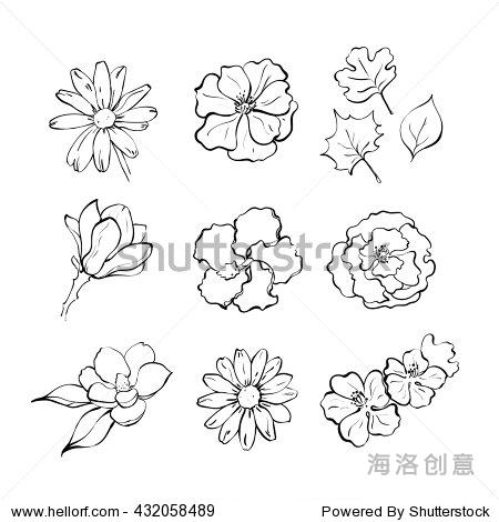 组手绘线花.洋甘菊,野玫瑰,木兰,樱花.矢量插图.集花卉草图手绘墨水.