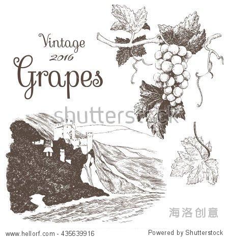 手绘插图的葡萄和葡萄园景观.墨水笔在矢量图片