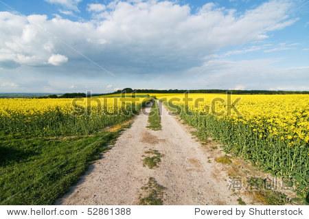 乡村的小路上