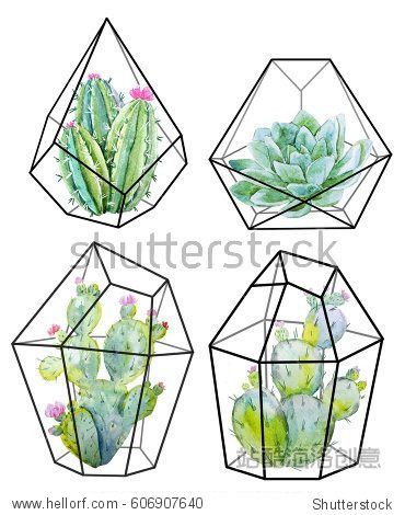 Watercolor floral  cactus. cactuses and succulents in terrariums  geometric florariume. black geometric crystal.