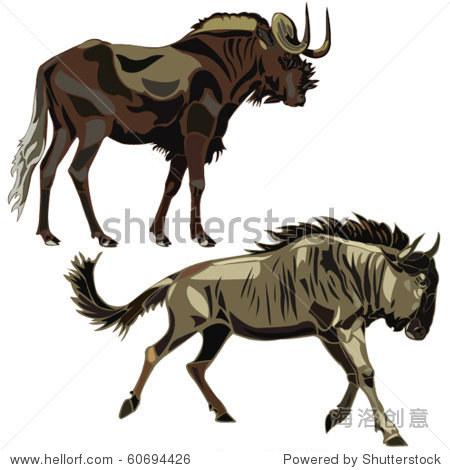 动物独特的非洲,条纹角马和黑羚羊