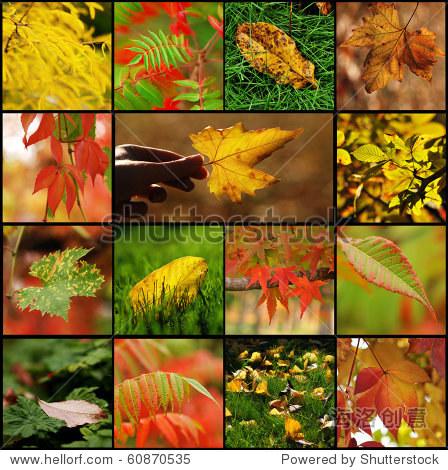 秋天树叶拼贴画 - 背景/素材