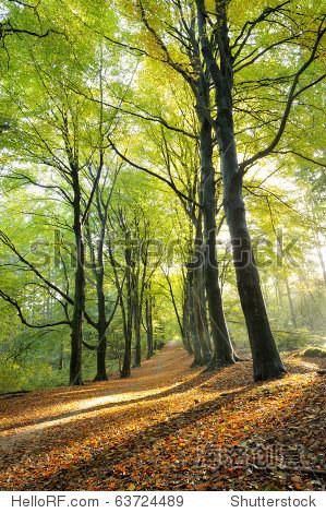 秋季阳光风景图片
