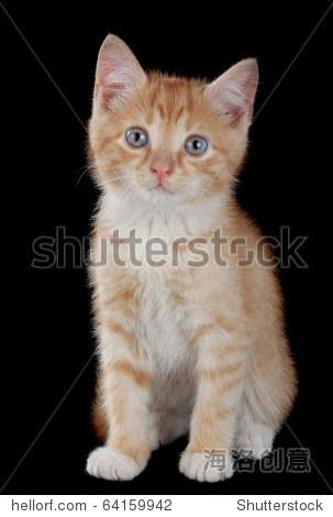 壁纸 动物 猫 猫咪 小猫 桌面 303_470 竖版 竖屏 手机