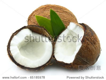 椰子树叶在白色背景