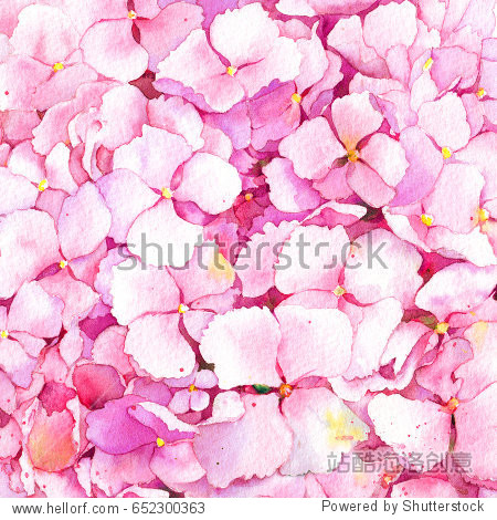 Pink hydrangea flowers background. Watercolor.
