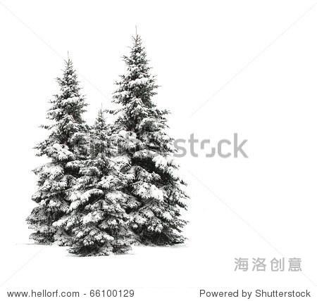 松树孤立在白色的 - 插图/剪贴图