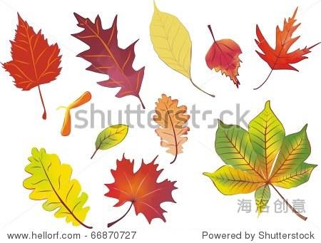 组孤立秋叶矢量插图在水彩画色彩 - 插图/剪贴图,自然图片