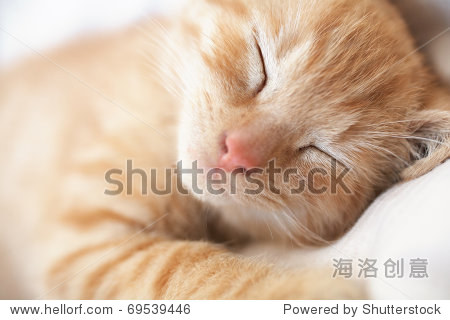 可爱的小猫睡觉的猫特写