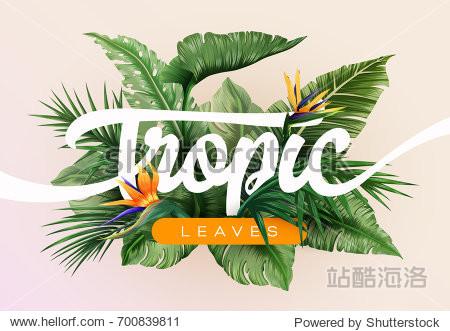 与热带树叶的异国情调模式