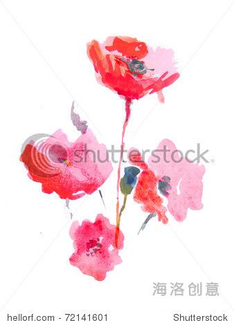 在白色背景抽象水彩画的罂粟花