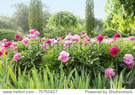 春天的风景与开花的分量和树木