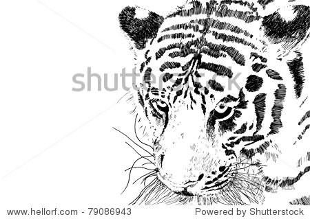 老虎头向量eps 10黑色和白色老虎头孤立在白色背景副本空间