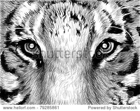 素描图片在黑色和白色老虎的眼睛-艺术