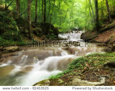 森林小溪贯穿石头