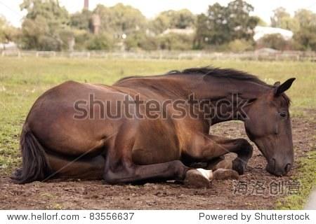 黑色的马在地上睡觉 - 动物/野生生物,自然 - 站酷,,.