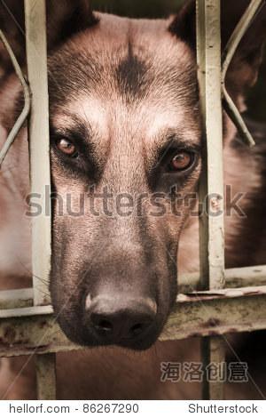 悲伤的狗在监狱 - 动物/野生生物,复古风格 - 站酷,,.