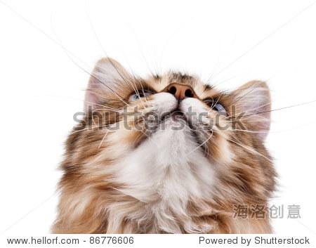年轻漂亮的猫在白色背景的画像-食品及饮料