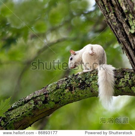 独特的白色松鼠坐在树上