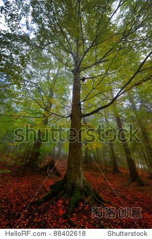 秋天的风景 - 公园/户外,自然 - 站酷海洛创意正版