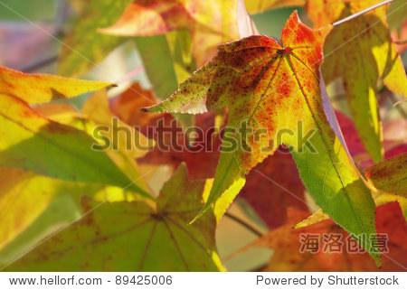 秋天的落叶 - 站酷海洛正版图片, 视频, 音乐素材交易