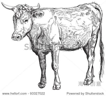 牛——黑白素描.位图拷贝向量