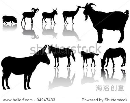 群有蹄动物的影子