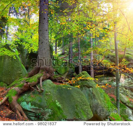 夏季森林大树生长在岩石上