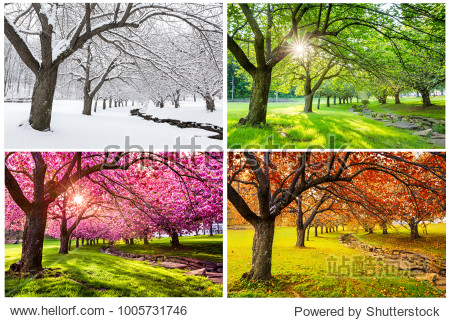 Four seasons with japanese cherry trees in Hurd Park  Dover  New Jersey
