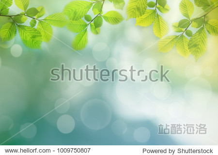 Spring background  green tree leaves on blurred background