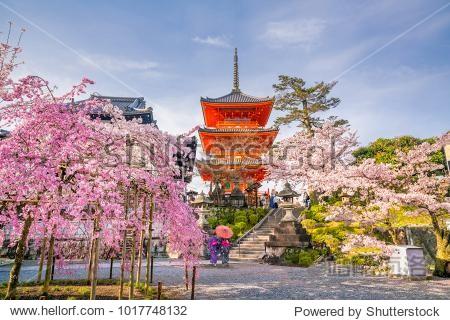 Kiyomizu-dera Temple and cherry blossom season (Sakura) spring time in Kyoto  Japan