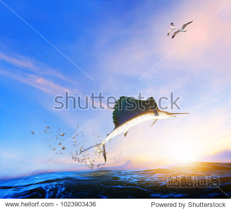 blue  black marlin fish jumping to mid air over blue sea and sea gull flying above