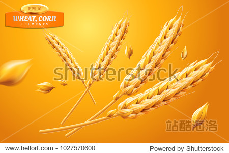 Detailed wheat ears  oats or barley isolated on a yellow background. Natural ingredient element. Healthy food or agriculture  bread or crop theme. Vector realistic 3d illustration.
