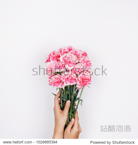 Woman hand hold pink carnation on white background. Flat lay  top view minimal festive spring flower background.