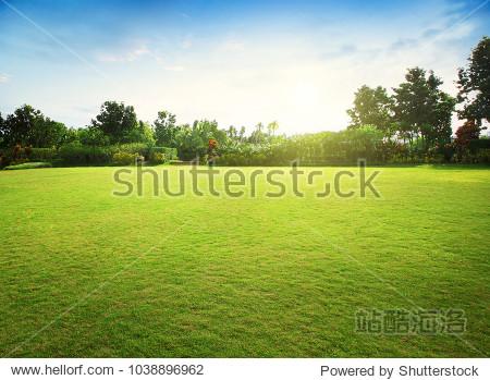 Natural green grass field in sunrise