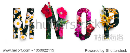 Flower font Alphabet m  n  o  p  made of Real alive flowers with Precious paper cut shape of letter. Collection of brilliant flora font for your unique decoration in spring  summer & many concept idea