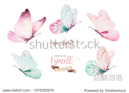 Watercolor colorful butterflies  isolated on white background. blue  yellow  pink and red butterfly spring illustration.