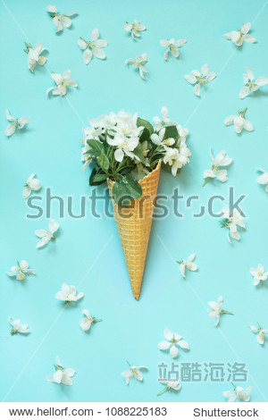 Creative still life of white spring flower in waffle cone on pastel blue background. Spring concept. Top view.