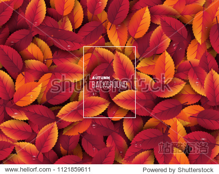 3d realistic autumn leaves with water drop. Autumnal background in red  orange and yellow colors. Design for web  print  wallpaper. Vector illustration.