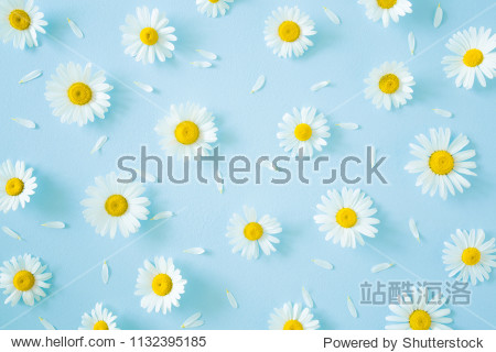 Fresh  white daisies with petals on pastel blue background. Beautiful flower pattern. Springtime. Soft light color. Mockup for special offers as advertising or other ideas. Flat lay. Top view.