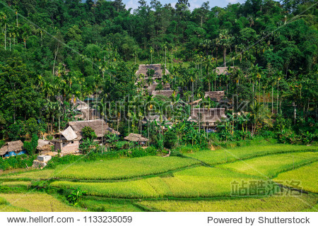 Rice terraces in the Pu Luong Nature Reserve  Thanh Hoa Province  Vietnam. The terraces are farmed by Muong and White Thai ethnic minorities