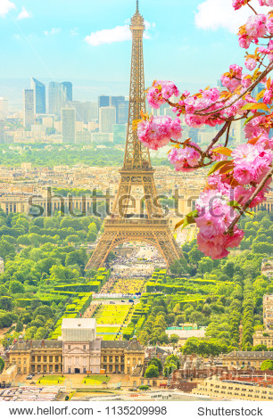 Cherry blossom branch in foreground and cityscape skyline of Paris with Eiffel Tower on background. Seasonal picturesque background. Scenic wallpaper with Eiffel Tower. Vertical shot.