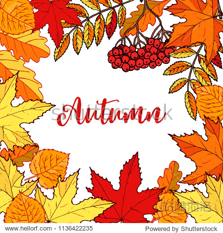 Hello autumn hand drawn fall leaves. Vector illustration for card  poster  flyer