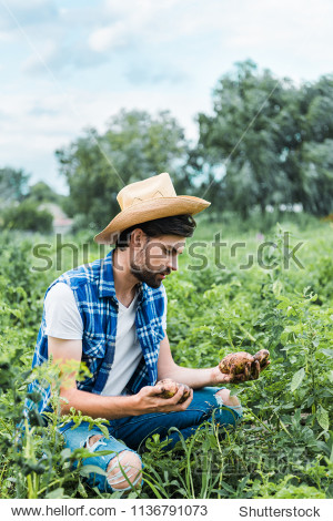handsome farmer holding ripe potatoes in field at farm