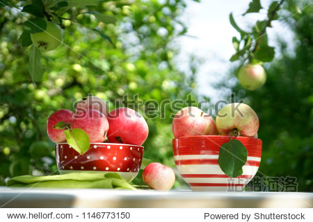 Fresh juicy ruddy apples in a red plate on a table on the background of an apple orchard and sky in nature on a sunny day. Beautiful apples in the sun close up  copy space.