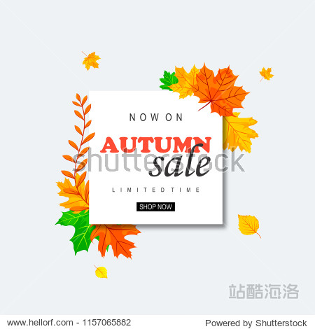 autumn sale design. fall sale background with leaf. EPS 10 Vector.