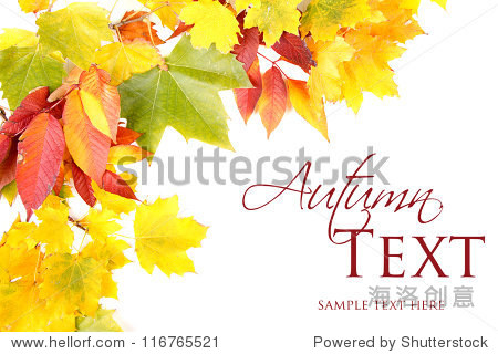 Autumn leaves red  green and yellow on white background