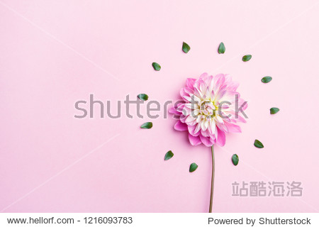 beautiful dahlia flower and green leaves arranged in circle  minimal concept  flat lay.