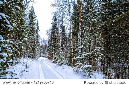 Winter snow forest road landscape. Winter road in winter forest. Winter snow forest road view