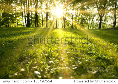 Sunlight in the green forest  spring time